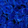 modre-ruze